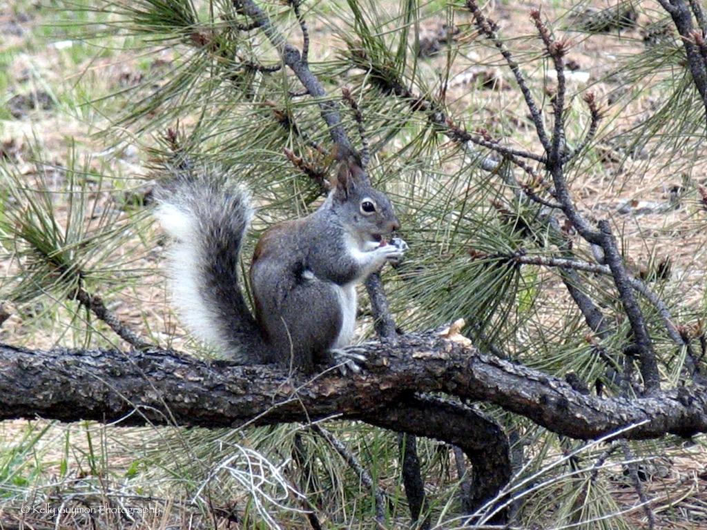 aber-squirrel