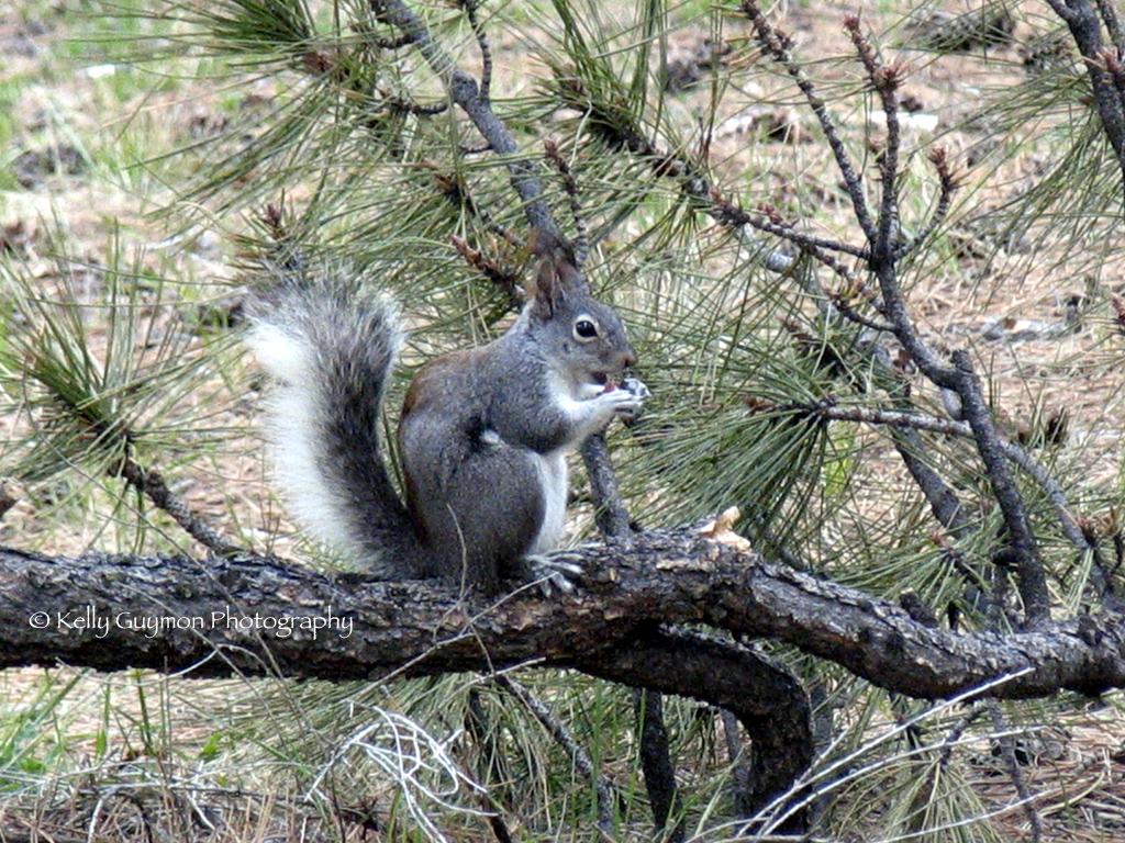 aber squirrel.jpg